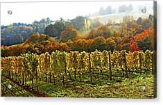 Fall In The Red Hills Of Dundee Acrylic Print by Margaret Hood