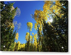 Fall Light Acrylic Print by Chad Dutson