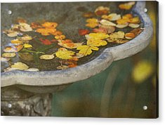 Fall Offering Acrylic Print by Rebecca Cozart