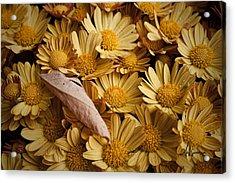 Fallen Leaf Acrylic Print by Jeff Swanson