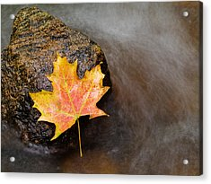 Fallen Leaf Acrylic Print by Jim DeLillo