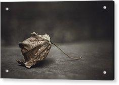 Fallen Leaf Acrylic Print by Scott Norris