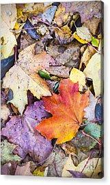 Fallen Leaves Acrylic Print by Lasse Ansaharju