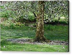 Falling Blossom Acrylic Print by Tim Gainey
