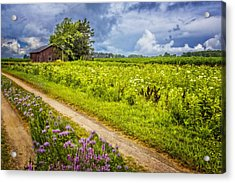 Family Farm Acrylic Print by Debra and Dave Vanderlaan