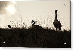 Family Time Acrylic Print by Marilyn Hunt
