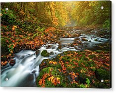 Fantasies Of Fall Acrylic Print by Darren White