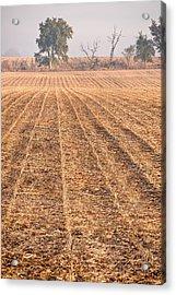 Farm Field Fog Acrylic Print by Steve Gadomski