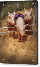 Farm - Pig - Getting Past Hurdles Acrylic Print by Mike Savad