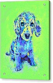 Green And Blue Dachshund Puppy Acrylic Print by Jane Schnetlage
