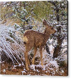 Fawn's First Snow Acrylic Print by Feva Fotos