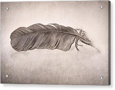 Feather Acrylic Print by Scott Norris