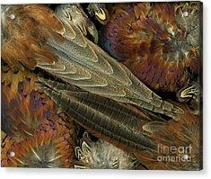 Featherdance Acrylic Print by Christian Slanec
