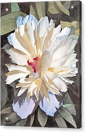 Feathery Flower Acrylic Print by Ken Powers