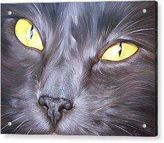 Feline Face 1 Acrylic Print by Elena Kolotusha