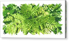 Fern Vignette Acrylic Print by JQ Licensing
