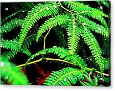 Ferns And Raindrops Acrylic Print by Thomas R Fletcher
