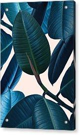 Ficus Elastica 2 Acrylic Print by Mark Ashkenazi