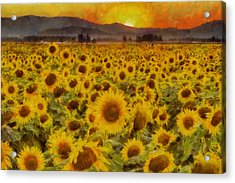 Field Of Sunflowers Acrylic Print by Mark Kiver