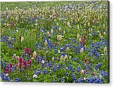 Field Of Wildflowers Acrylic Print by Greg Vaughn - Printscapes