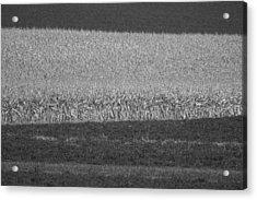 Fields Near Madison Acrylic Print by Steven Ralser