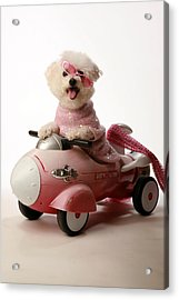Fifi Experiances A Rough Landing In Her Rocket Car Acrylic Print by Michael Ledray