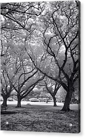 Fighting Trees Acrylic Print by Sean Davey