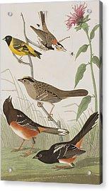 Finches Acrylic Print by John James Audubon