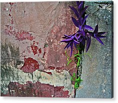 Finding Beauty Everywhere Acrylic Print by Elizabeth Hoskinson