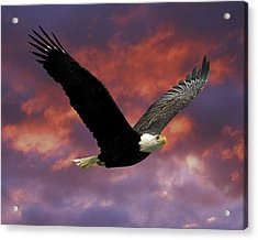 Fire Cloud And Eagle Acrylic Print by Clarence Alford