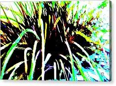 Fireworks Acrylic Print by Marsha Heiken