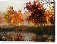 First Light At The Pine Barrens Acrylic Print by Louis Dallara