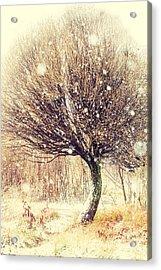 First Snow. Snow Flakes Acrylic Print by Jenny Rainbow