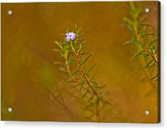 First To Flower Acrylic Print by Az Jackson