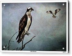 Fish Hawks Acrylic Print by John Williams