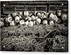 Fishing Lobster Acrylic Print by Elena Elisseeva