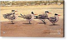 Five Terns Acrylic Print by Julianne Felton