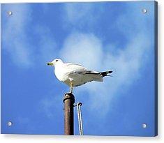 Flagpole Gull Acrylic Print by Al Powell Photography USA