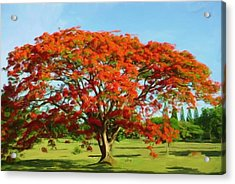 Flamboyan Royal Poinciana Acrylic Print by Yiries Saad