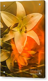 Flames Of Intimacy Acrylic Print by Jorgo Photography - Wall Art Gallery