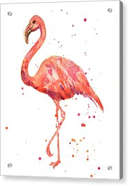 Flamingo Facing Left Acrylic Print by Alison Fennell