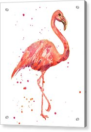 Flamingo Facing Right Acrylic Print by Alison Fennell