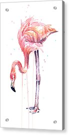Flamingo Illustration Watercolor - Facing Left Acrylic Print by Olga Shvartsur