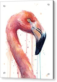 Flamingo Painting Watercolor - Facing Right Acrylic Print by Olga Shvartsur