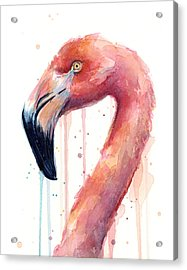 Flamingo Watercolor Illustration Acrylic Print by Olga Shvartsur