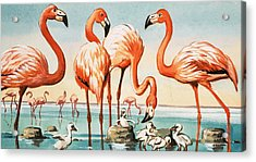 Flamingoes Acrylic Print by English School