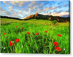Flatiron Poppies Acrylic Print by Scott Mahon