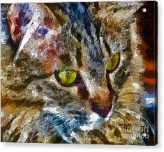 Fletcher Kitty Acrylic Print by Marilyn Sholin