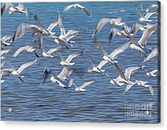 Flight Acrylic Print by Kate Brown