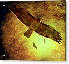 Flight Of The Golden Hawks . 7d5066 Acrylic Print by Wingsdomain Art and Photography